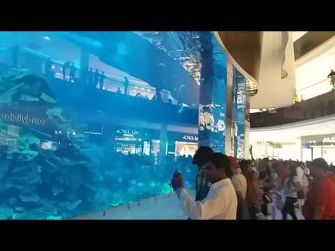 Amazing. Huge Aquarium, Dubai, UAE United Arab Emirates