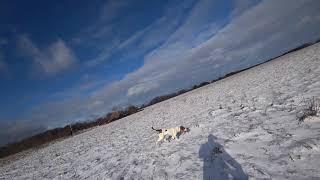 Охота #137 с гончими на зайца и лису