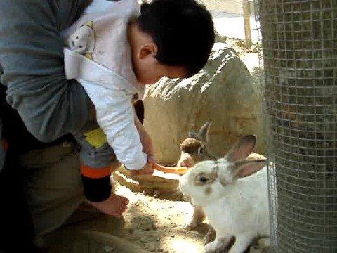 2-10-970105餵兔子流口水
