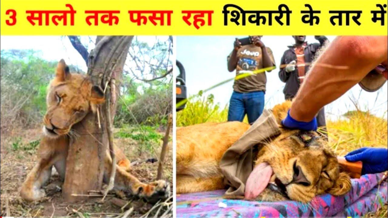 8 जानवर जिन्होंने बेहद मुश्किल हालात में भी हिम्मत नहीं हारीanimal that faced tough situation,story