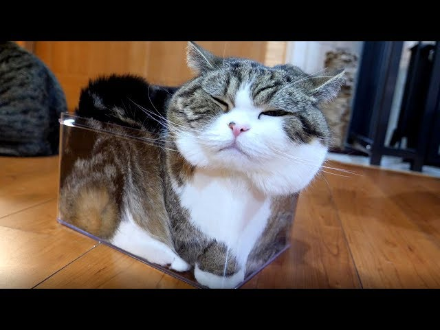透明な箱とねこ2。-Transparent box and Maru 2.-