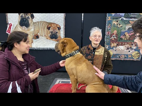 Meet the Breeds NYC — Chinese Shar-Pei