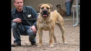 Los Mejores Perros Guardianes  (Loquendo)
