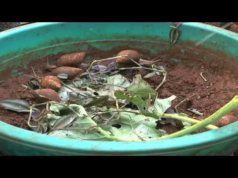 Kenyan entrepreneur ventures into snail farming