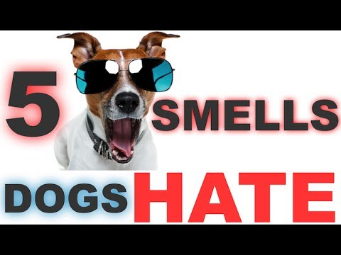 5 Smells Dogs Hate | HQ