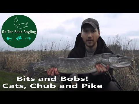 Catfish Fishing At Town Parks, Throop Chubing And Royalty Pike Fishing