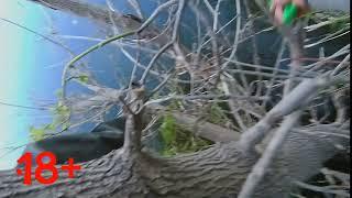 твичинг ловля щуки осенью рыбалка на спиннинг