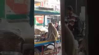 Video Thekma Bazar ke Naye Dukaandar... Funny video download MP3, 3GP, MP4, WEBM, AVI, FLV Juli 2018