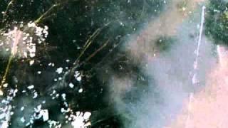 """Gądków Wielki """"kłusownictwo nad jeziorem"""""""
