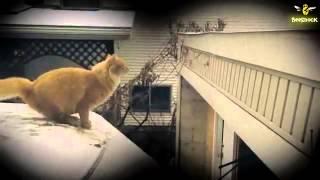 The Biggest   Cat Fails