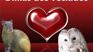 Dimas e seus Teclados - A coruja e a Cotia