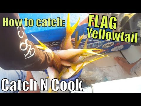 How to Catch FLAG Yellowtail Snapper Catch N Cook | Fishing with Craig Part 2