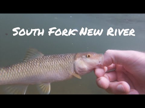 Fishing The South Fork New River NC