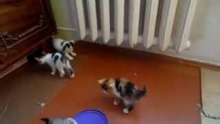 SOS-срочно разбираем котят 7 шт.!!!! 3 девки и 4 пацаны!!!!