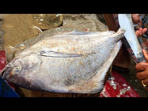 Incredibly Big Black Pomfret Cutting Skills By Bangladeshi Fisherman, Fastest Pomfret Fish Slicing