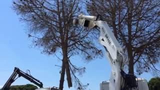 Κοπή δέντρων Κλαδεμα δέντρα 6977970947 ΚΑΡΤΑΛΗΣ ΘΕΟΦΙΛΟΣ