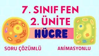 HÜCRE |  7. SINIF FEN BİLİMLERİ 2. ÜNİTE