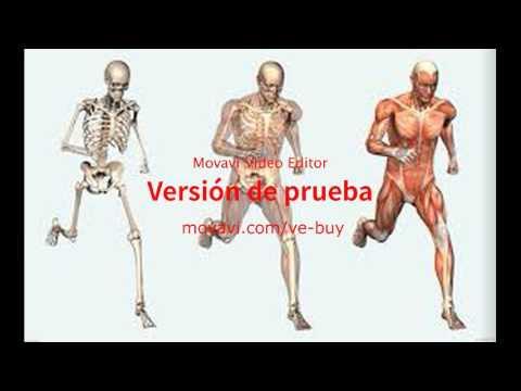 human-body-listening-activity