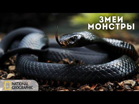 Змеи - монстры | Документальный фильм National Geographic