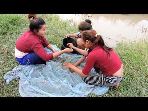 Amazing Fishing at Pailin Province - Cambodia Traditional Fishing - Khmer  Net Fishing (Part 317)