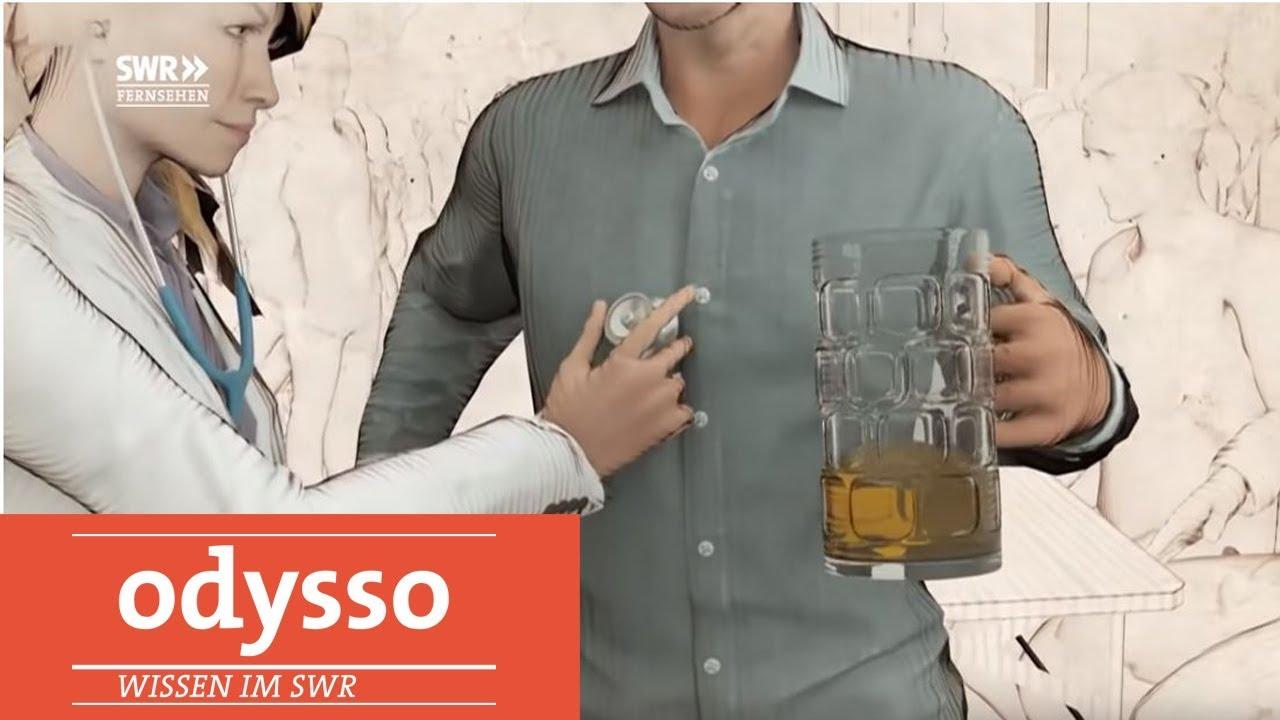 Wie Sich Der Körper Vom Alkohol Erholt Odysso Youtube