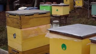 Пасека 13.11.2019 г. Нужен совет. Вопрос в конце видео. Как себя чувствуют пчелы.