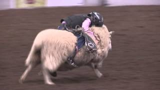 Mutton Busting at Rodeo All-Star
