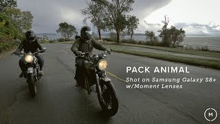 Pack Animal | Shot On Samsung Galaxy S8+ and Moment Lenses