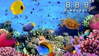 Червоне море  Красное море(Чем полезно Красное море? Подводный мир Красного моря. Дайвинг в Красном море. Климат и погода в Египте...., 2016-10-03T10:28:11.000Z)