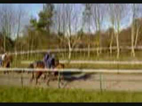 Buy A Racehorse In Newmarket - Two Year Old Filly For SALE
