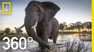 Elephant Encounter in 360 - Ep. 2 | The Okavango Experience