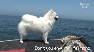 This Crazy Dog Loves Going On Boat Rides | SBS Animal
