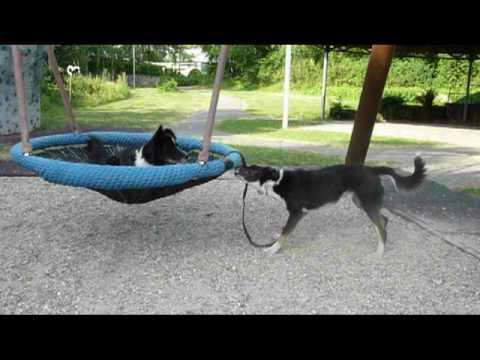 dog playground - YouTube