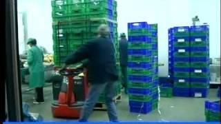 Manipulación de Frutas y Hortalizas. Ocupaciones. SAE.
