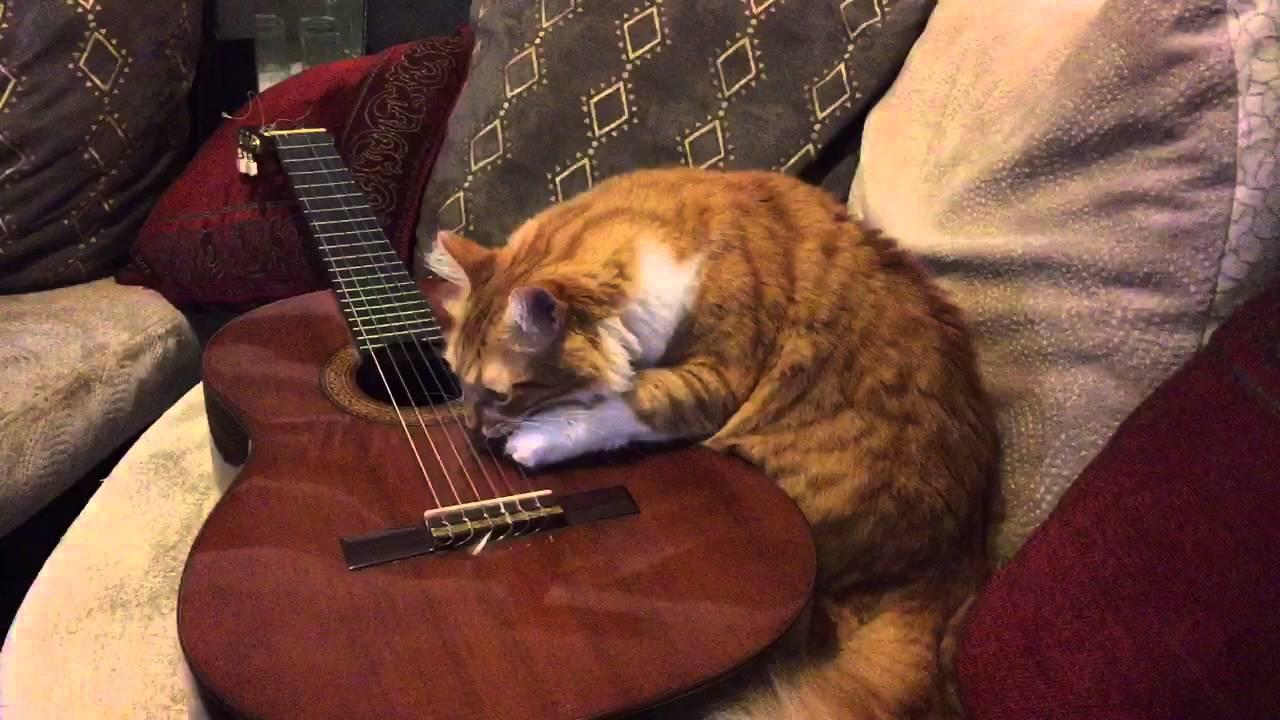 Играющий кот на гитаре картинки