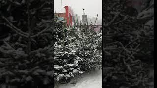 Смотреть видео Елки 2019 в Москве с доставкой онлайн