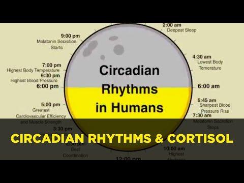 Circadian Rhythm Sleep Clock Affecting Cortisol & Hormones