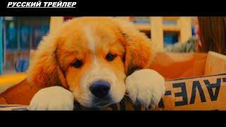 Собачья жизнь 2 - Русский трейлер 2019 ✅