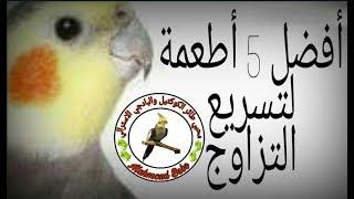 Gambar cover أفضل 5 أطعمة لتسريع التزاوج والإنتاج لجميع انواع طيور الزينه الجزء الاول
