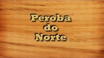 Peroba do Norte -  Tipos de Madeira