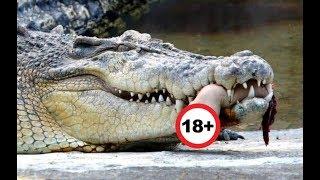 Что ты знаешь о самых опасных животных мира? ТОП 10