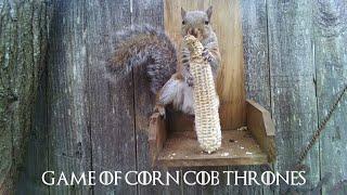 Game of Corn Cob Thrones - episode 8