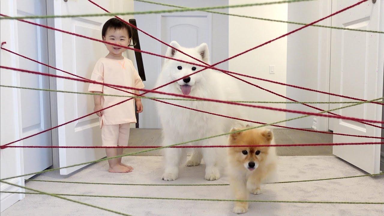 강아지와 아기 vs 결계