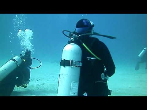 Dolphine Dive Honduras