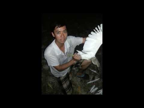 lưới bẫy chim giá rẻ - cung cấp lưới bẫy chim theo yêu cầu lh 01642220162