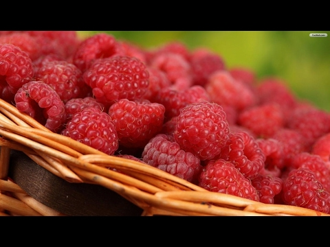 МАЛИНА. Как вырастить малину. Как формировать кусты. Raspberry cultivation and maintenance