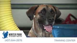 Canine Training Center | Winter Park Veterinary Hospital
