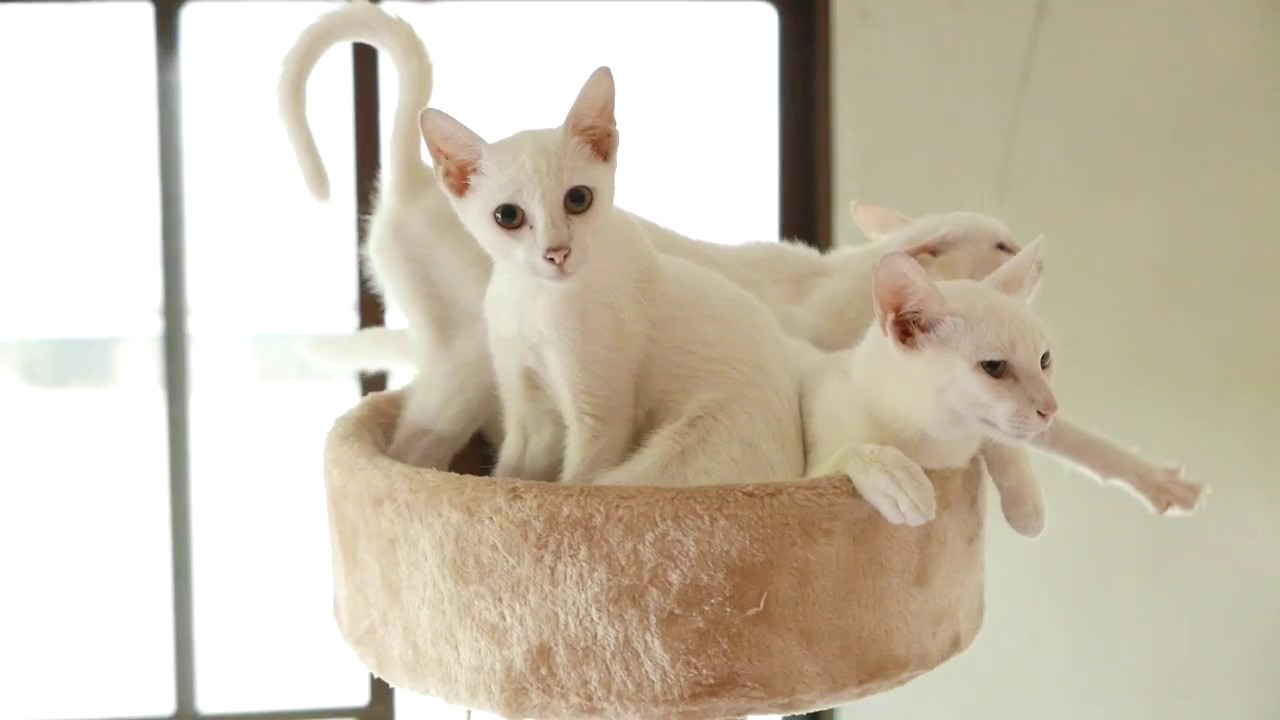 Three cute cats relax in their bed.