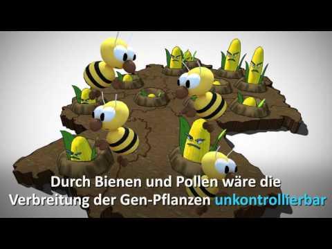 Gentechnik-Schummelei: so wird beim neuen Gesetz getrickst!