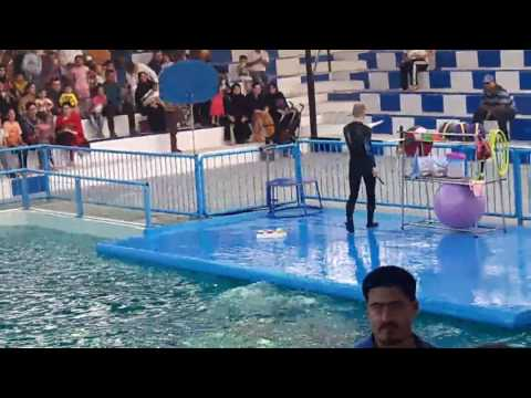Dolphin show at Sea World Bahria Maritime Musuem Karsaz Karachi